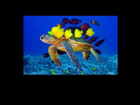Symbiosis and the Evolution of Life in the Ocean on YouTube