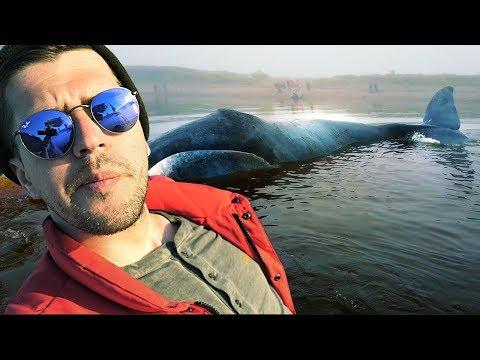 Вопрос: Как киты избегают кессонной болезни?
