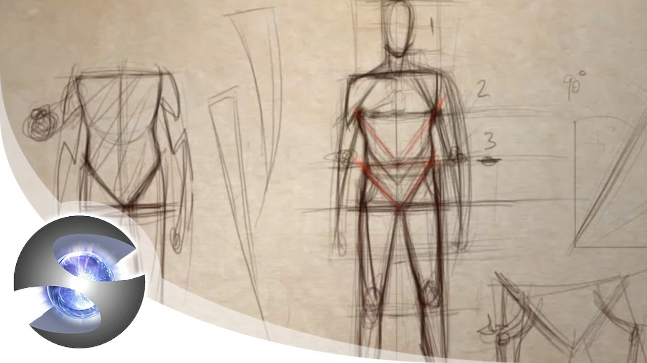 How to Draw the Proportions of the Adult Male - YouTube