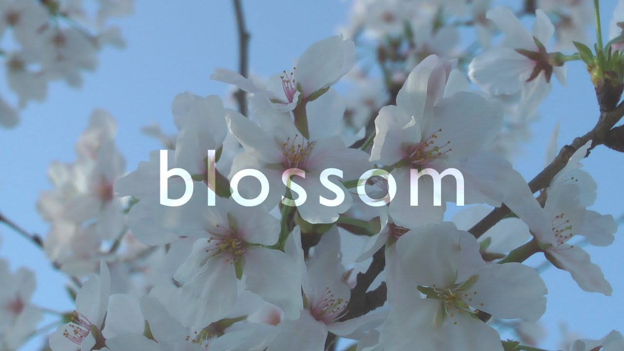 BLOSSOM (60fps, Relaxing Cinematic Nature Film)