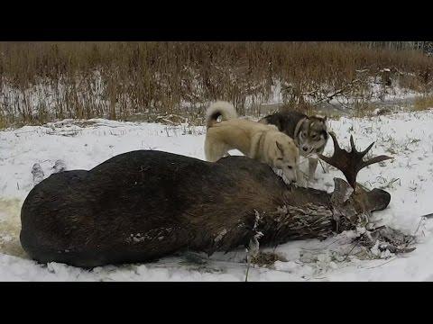 Охота #16 охота