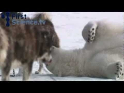 amazing animal friendship