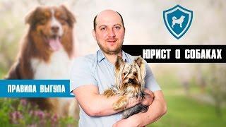 Правила и законы о домашних животных. Юрист ответит