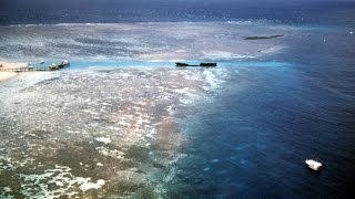 Nearly half of Great Barrier Reef expected to die in next month