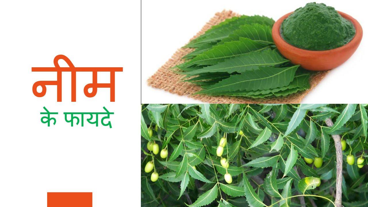 नीम के फायदे neem ke fayede health benefits of neem  नीम के फायदे neem ke fayede health benefits of neem in hindi