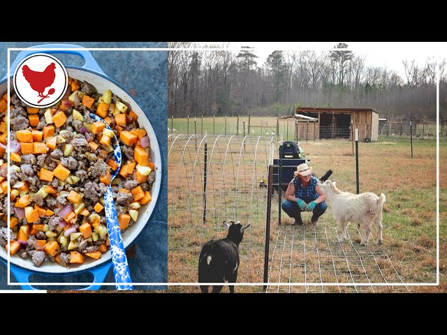 SHELTER FOR THE GOATS & AN EASY SUPPER | VLOG