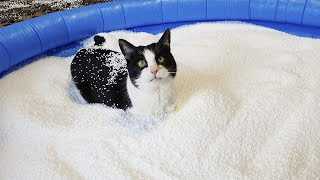 Pool of Bean Bag Filling. Cat's Reaction