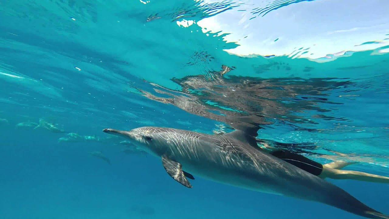 Nuotando coi delfini 5 sataya reef 2014 youtube - Zoomarine bagno coi delfini ...