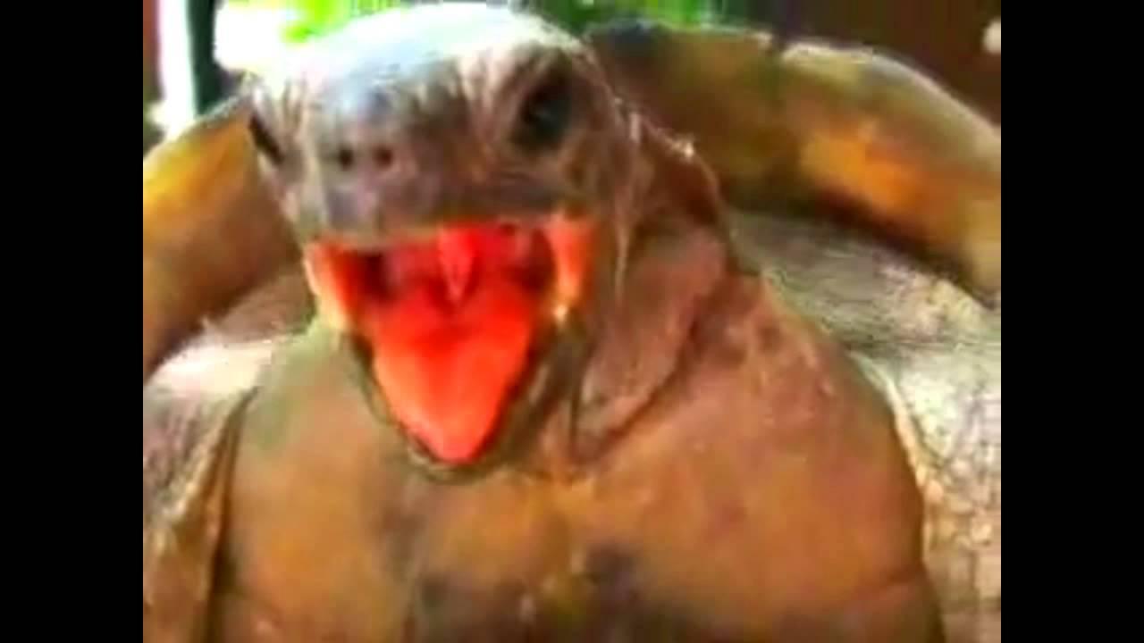 Imagine Turtles Shots Orgasm Remix