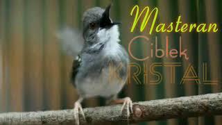 Download lagu Masteran Burung Ciblek Kristal