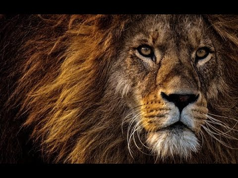 Wildlife - Royalty Free Video