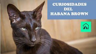 CURIOSIDADES DEL HABANA BROWN