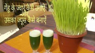 How to grow and make wheatgrass juice at home/गेंहू के जवारे कैसे उगाऐं और उसका ज्यूस कैसे बनाऐं