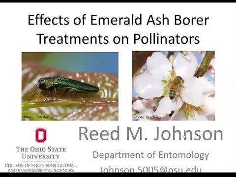 Effects of EAB Treatments on Pollinators