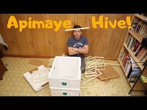 🔵Apimaye Introduction! (The Swiss Army Knife Of Hives)