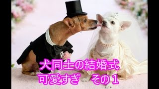 犬 かわいい【犬好き必見】犬同士の結婚式が可愛い過ぎ!!その1Must-s...