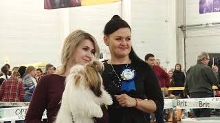 """Выставка собак """"Кубок Запорожья 2019"""""""