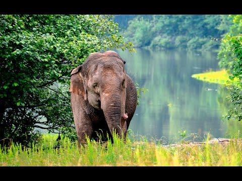 The Elephant Sanctuary | Remembering Misty 1964-2016