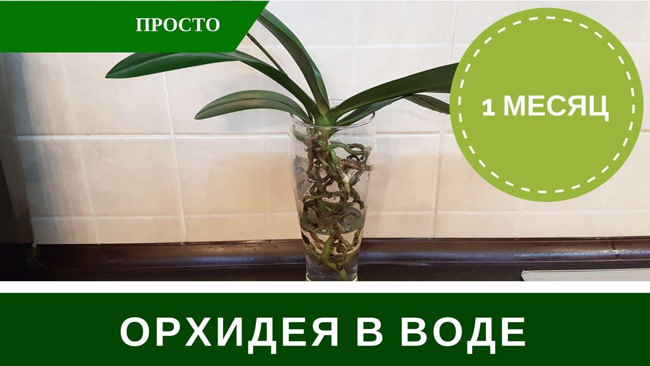 Орхидея в Воде Без <b>Грунта</b> - YouTube