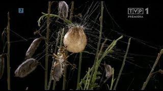 Niezwykłe pająki - Film dokumentalny.
