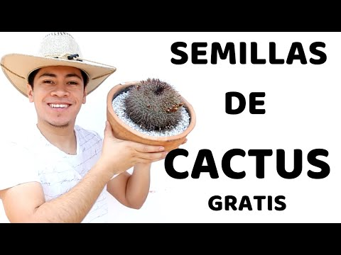 COSECHA SEMILLAS DE CACTUS POR MONTONES Y GANA DINERO EXTRA