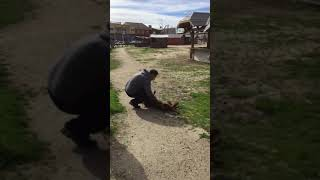 lost dog can t believe she s seeing her owner again until she smells him