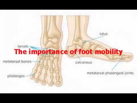 The Importance of Foot Mobility