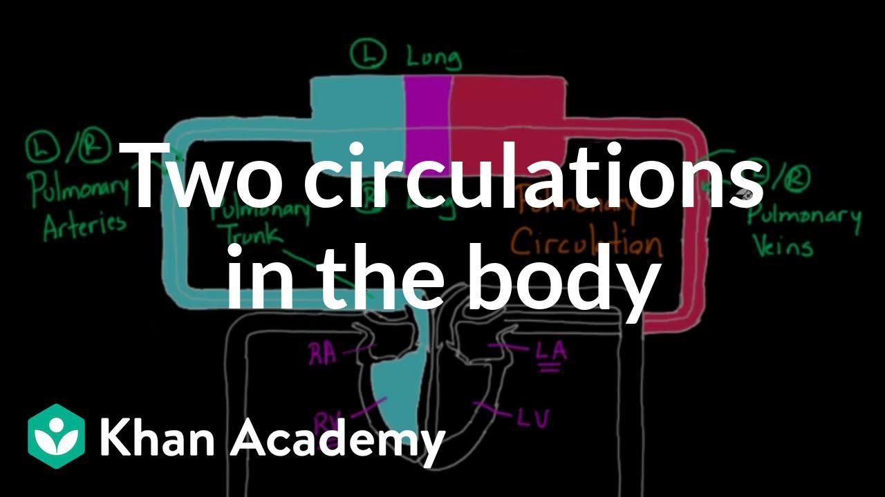 Two circulations in the body (video) | Khan Academy