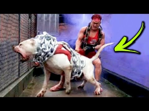 The Most Unusual DOGS in The World
