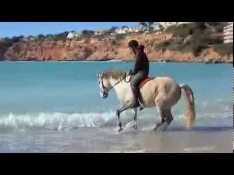 Brave horse in the sea waves of El Toro beach, Mallorca.