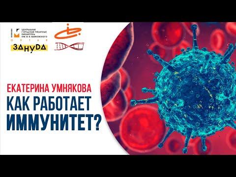 Как работает иммунитет?