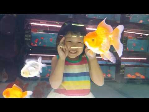 Nice Goldfishes At Qian Hu Fish Farm