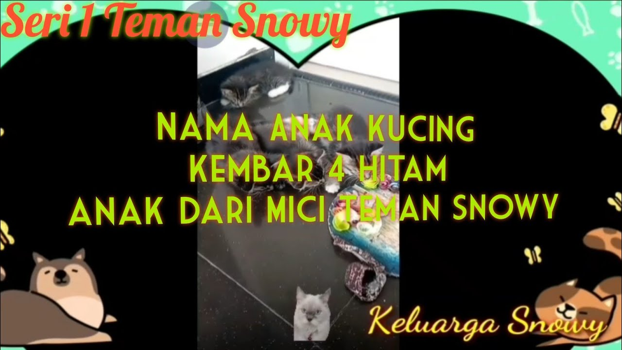 Nama Anak Kucing Kembar 4 Hitam Anak Dari Mici Teman Snowy Youtube