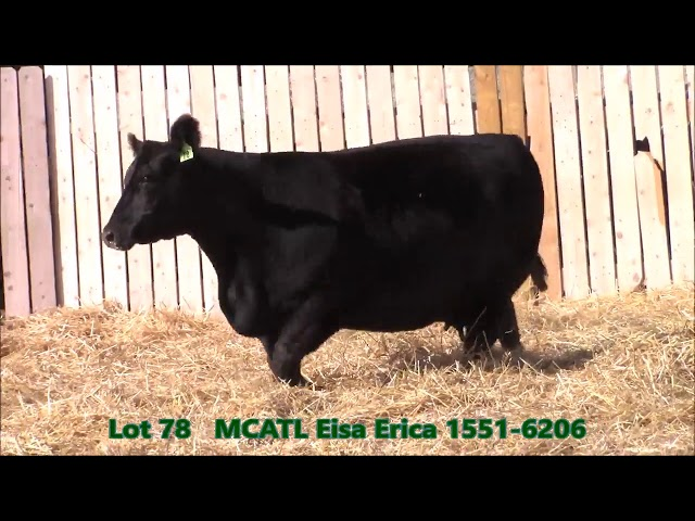 Musgrave Angus Lot 78