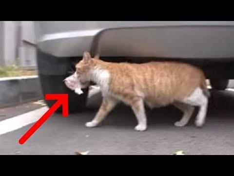 Женщина кормила кошку но за 16 сентября