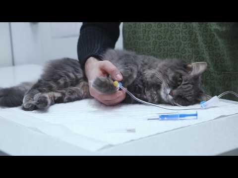 Как ставят капельницу кошке