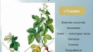 Презентация Вегетативное размножение покрытосеменных растений