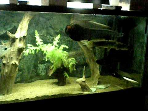Prehistoric monster fish tank - YouTube