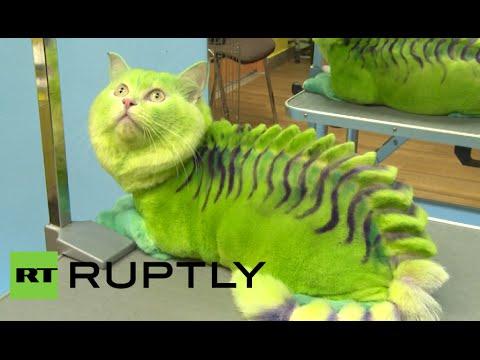 Puss the Magic Dragon: Cat transformed in Russian pet salon
