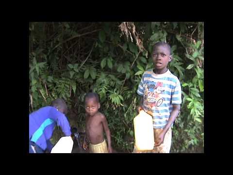 Plantation à lutendele Mbudi commune de ngaliema kinshasa