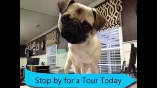Top Doggie Daycare | Best Friends Bed & Biscuit | Greensboro NC | Triad Dog Boarding Kennel thumbnail