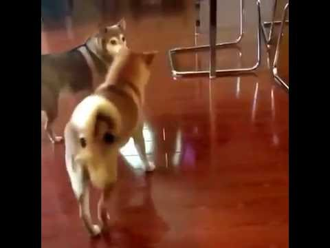 Dog dance. Come on and dance with me!