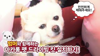 [애견카시트] 멈머가 달콤한 마카롱 펫 드라이빙 킷 설…