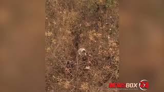 На улице Сельской собака бойцовской породы задрала  кошку на глазах у детей