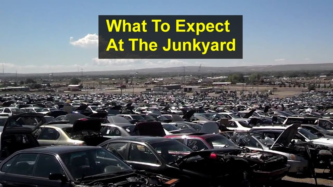 What to expect when you go to a self serve junkyard. - VOTD - YouTube