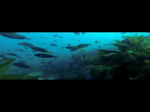 Scuba Diving - Casino Point, Catalina using GoPro HERO 3