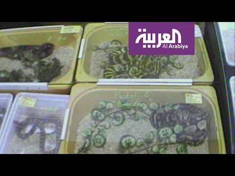 خفايا صفقات مافيا الزواحف في ألمانيا!.  - نشر قبل 10 ساعة