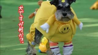 11月6日(日)第18回シュナフェスが成田ゆめ牧場で開催されました ファ...