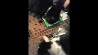 коты-наркоманы)