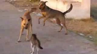 Angry Cats Vs Dogs Funny Compilation Video Ever| cats and dog Fight|My Way